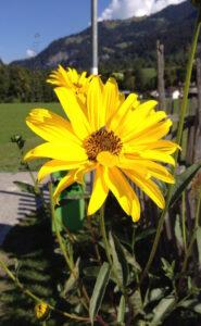 Blüten am Weg. Wer kennt diese Pflanze?
