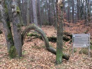Skurill als Bogen geformter Baum neben einer Info-Gedicht-Tafel zum Thema Wegekreuz