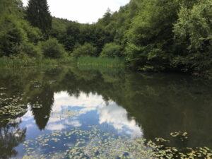 Kleiner See, umgeben von Bäumen, die sich im Wasser spiegeln