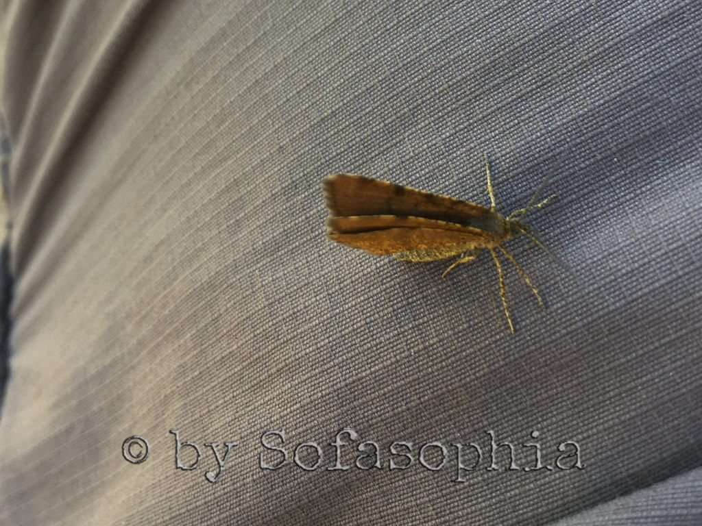 Bei der nächsten Siesta landet ein Schmetterling auf meinem Hosenbein.