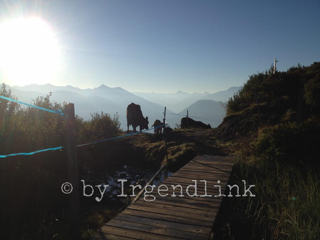 Kühe im morgendlichen Gegenlicht vor dunstigen Bergen in der Ferne.