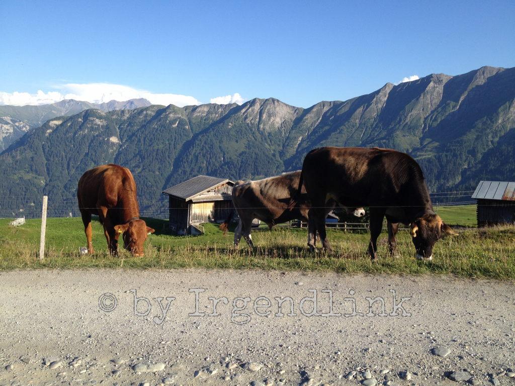 Kühe grasen am Straßenrand nahe des Parkplatzes. Hinter ihnen eine Alphütte und dahinter Berge.