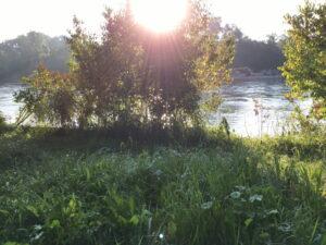 Morgensonne über Aare, Gebüsch und Wiese
