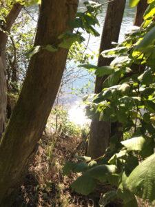 Aareufer, Bäume, Wasserglitzern